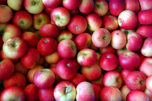 ...welcher Apfel sind Sie? (Bildquelle: prspics/piqza.de)